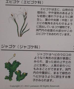 Moss1r