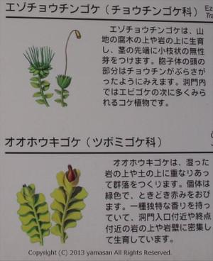 Moss2r